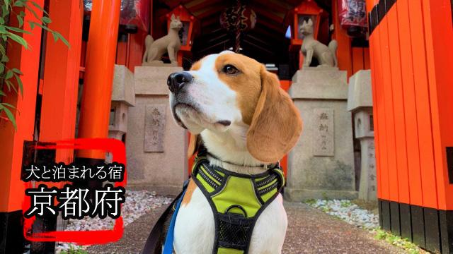 京都犬バナー