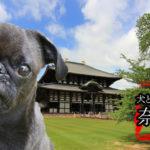 "<span class=""title"">【おすすめ旅行】関西-奈良|愛犬と泊まる宿 飼い主も楽しむ2宿!</span>"