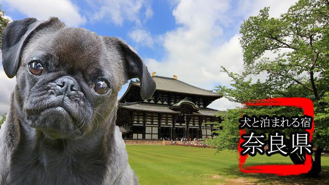 奈良犬バナー