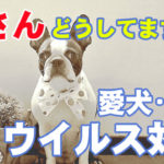 """<span class=""""title"""">犬や猫のコロナウイルスに有効!動物病院でおすすめの除菌剤で対策!</span>"""
